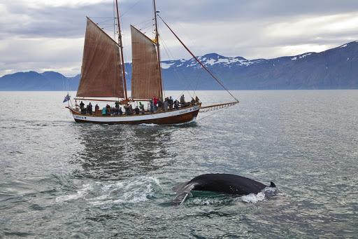 Whalewathing in Husavik Iceland