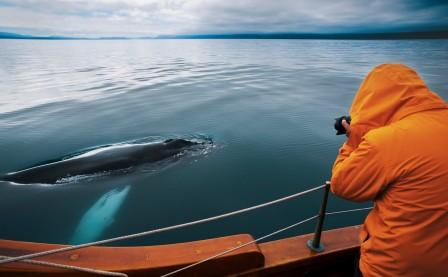 Whale Watching Tour from Húsavík