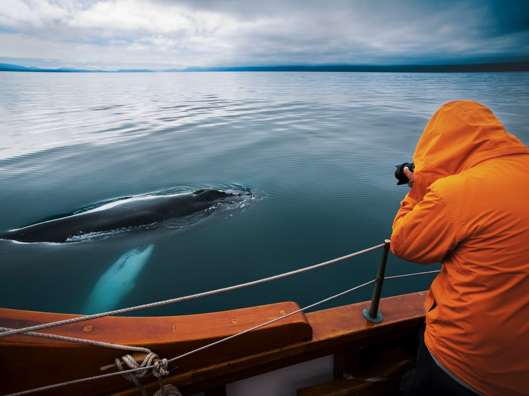 Whale Watching from Húsavík<br/>&nbsp;